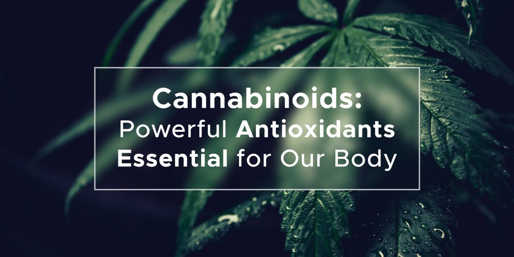 Cannabinoids: powerful antioxidants essential for our body | We Are Canna