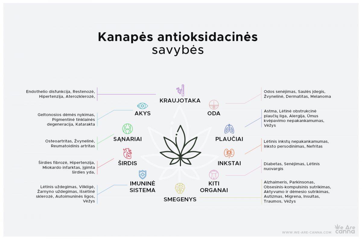 Kanabinoidai: stiprūs antioksidantai, būtini mūsų organizmui | We Are Canna | Kanapės antioksidacinės savybės
