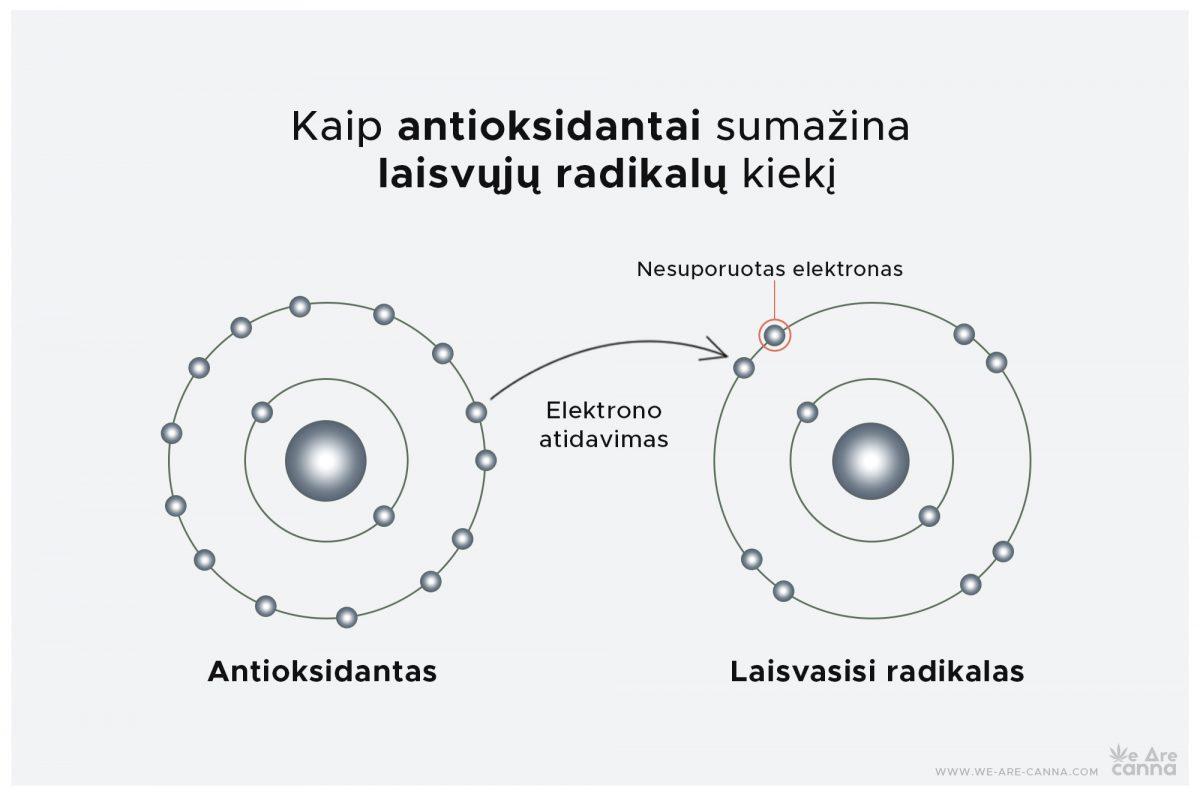 Kanabinoidai: stiprūs antioksidantai, būtini mūsų organizmui | We Are Canna | Kaip antioksidantai sumažina laisvųjų radikalų kiekį