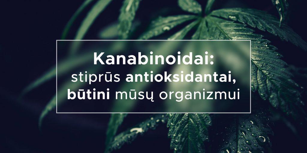Kanabinoidai: stiprūs antioksidantai, būtini mūsų organizmui | We Are Canna