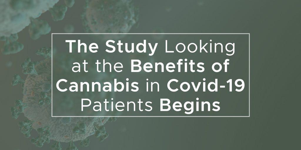 Covid-19 Cannabis Sativa - Covid-19 Kanapes