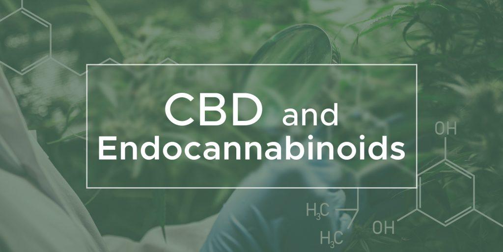 CBD and Endocannabinoids | We Are Canna