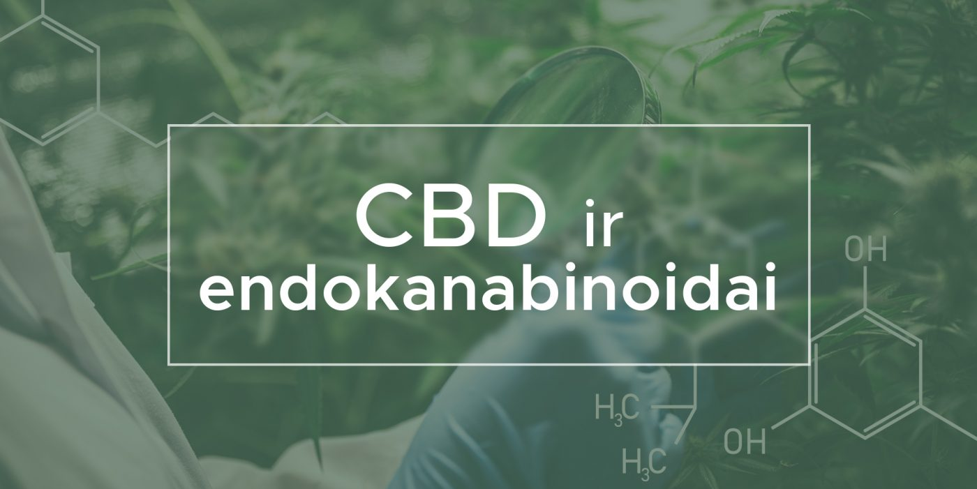 CBD ir endokanabinoidai | We Are Canna